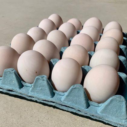 20 Duck eggs